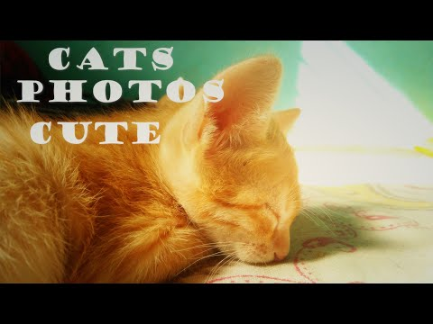CATS PHOTOS CUTE COLLABORATION | #Greenspidy