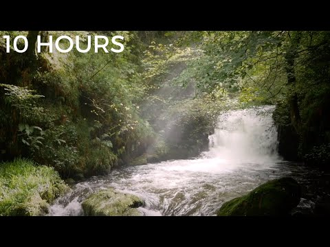 forest-waterfall-sounds-for-relaxing-|-white-noise-nature-sounds-for-stress-relief,-tinnitus-&-study