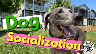 Dog Socialization Training at a Dog Friendly Restaurant