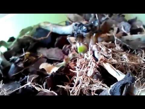Как спасти орхидею? elHow