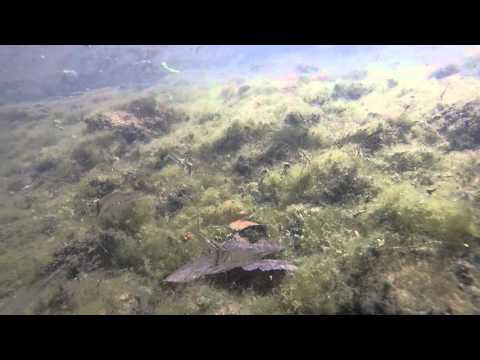 Costa Rica underwater original footage |