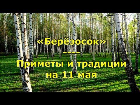 Народный праздник «Берёзосок»  Приметы и традиции на 11 мая