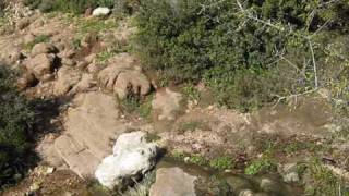 Поход по горе Кармель(Наша группа туристов под руководством Исраэля Цигельмана прошла по горе Кармель 25 километров. Любовались..., 2009-12-24T13:07:57.000Z)