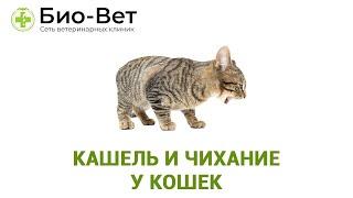 Кашель и чихание у кошек. Ветеринарная клиника Био-Вет.