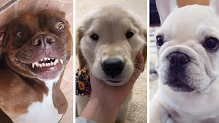 Funny Dog TikToks to Brighten Up Your Day