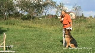Дрессировка немецкой овчарки. Команды: Ко мне-Рядом-Барьер