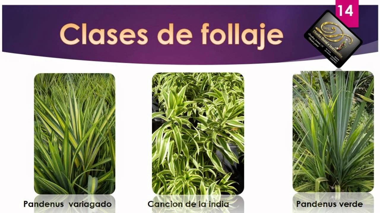 Tipos de follajes para arreglos florales youtube - Plantas de hojas verdes ...