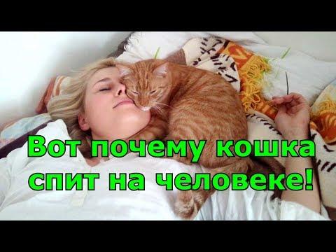 Как кот выбирает с кем спать