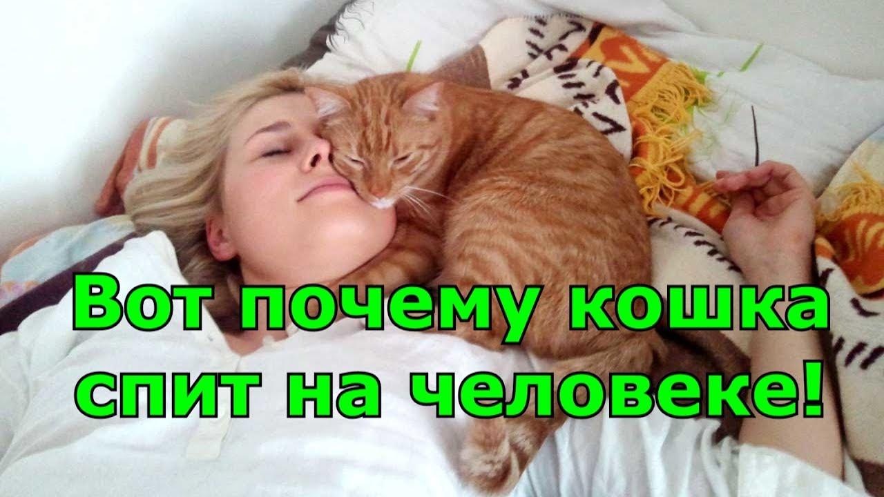 Вот почему кошка спит на человеке! Любимые места кошки. Приметы.