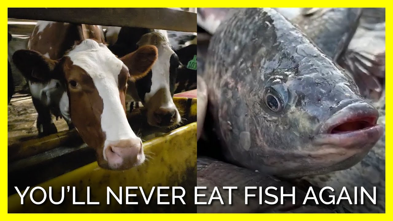 You'll Never Eat Fish Again In 60 Seconds