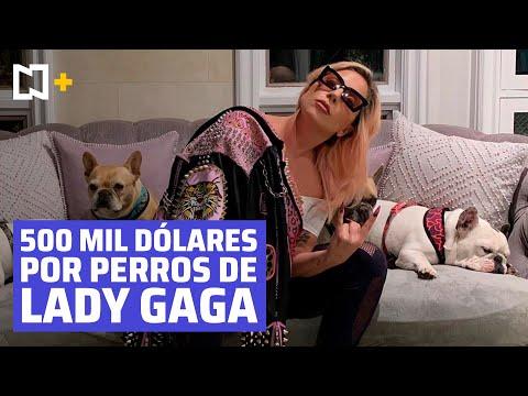 Lady Gaga ofrece 500 mil dólares de recompensa por sus perros robados
