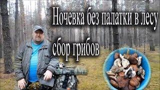 Одиночный поход в лес с ночевкой без палатки (собираем и жарим грибы).