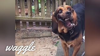 Hound Dogs | Funny Dog Compilation