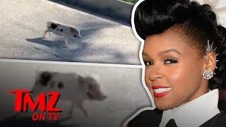 Janelle Monae Saves A Little Piggie! | TMZ TV