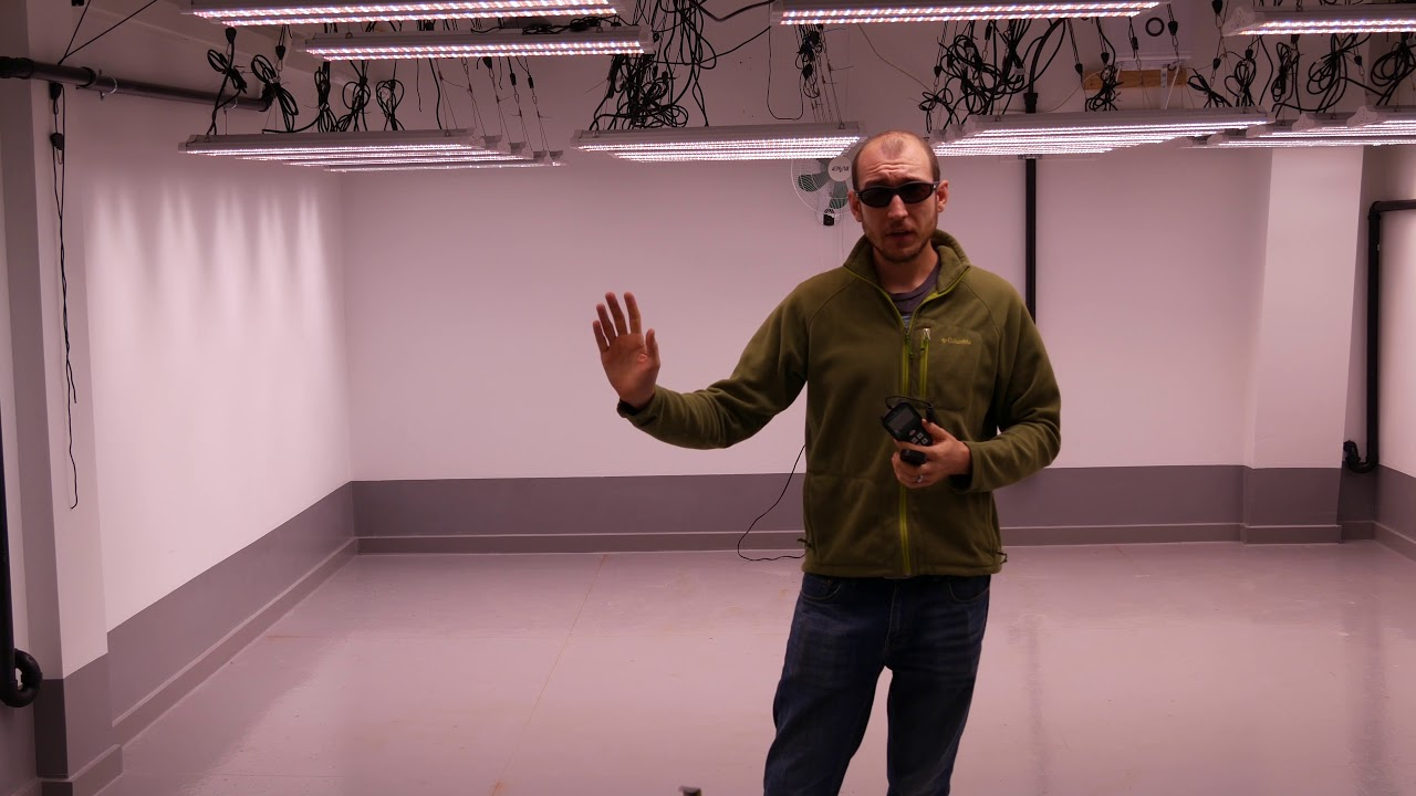 How to Set up a Commercial Grow Room with Electric Sky LED ...