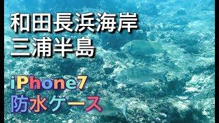 三浦半島の海水浴場 和田長浜海岸は水質も良くキレイですが 岩場でシュ...