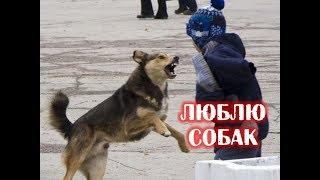 Люблю собак больше чем людей