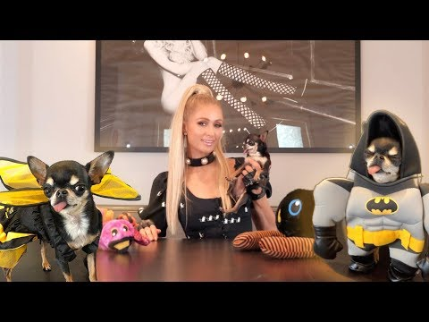 Paris Hilton's Halloween Costume Lookbook For Dogs