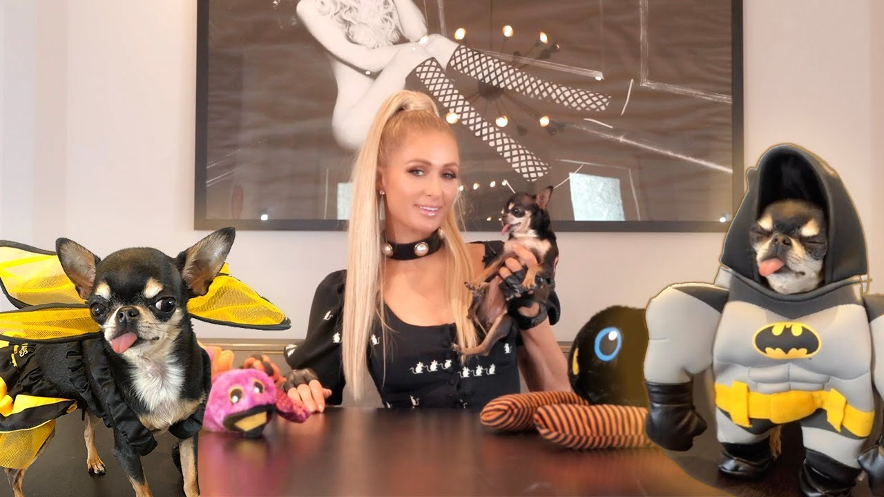 Download Paris Hilton's Halloween Costume Lookbook for Dogs