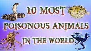 10 Most Poisonous Animals In The World | Most Venomous Animals 2018 | Top 10 Deadliest Animals