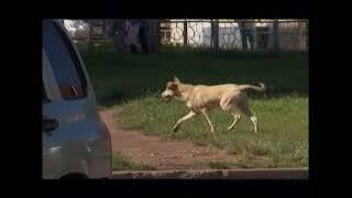 Добро пожаловаться жители Рябикова опасаются бездомных собак