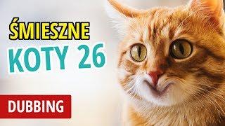 ŚMIESZNE KOTY #26  DUBBING: MATT OLECH