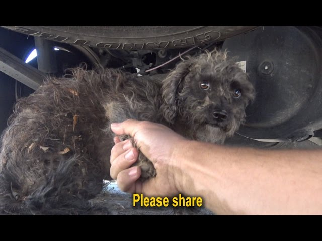I held the paw of this stray dog and asked her to help me.  Please share.