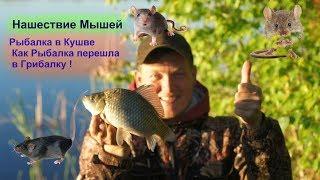 Рыбалка в Кушве -  Как Рыбалка перешла в Грибалку ! Нашествие Мышей!