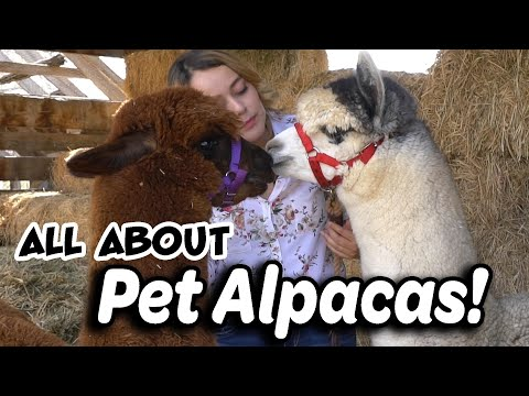 Alpaca Basics for New Owners