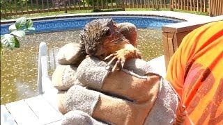 Saving Drowning Baby Squirrel From My Pool
