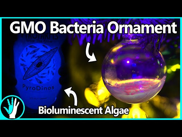 Bioluminescent and Genetically Modified Christmas Ornaments