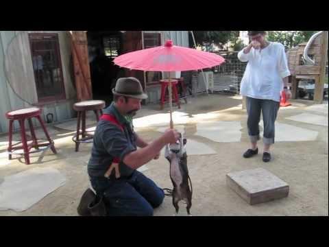 Berkeley Trick Dog Training: Canine Circus Class Level 1 oct 2