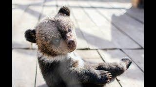 Полицейские нашли двух медвежат на территории гостиницы в Улан-Удэ