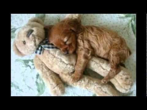 Animali pucciosi - YouTube