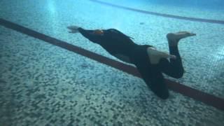 видео: DNF 125m или как проплыть 5 бассейнов на одном дыхании