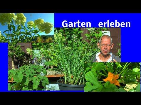 Garten erleben Feige umtopfen Zukunft kleine Veränderung im Garten geplant