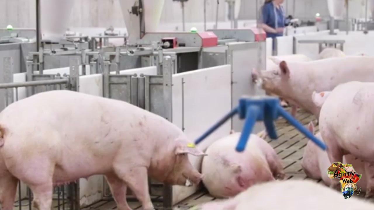 Download Elevage porcin se former c'est se professionnaliser