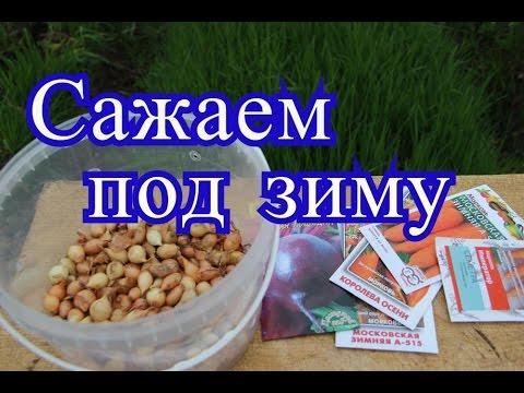 Посадка лука под зиму. Сорта моркови, свеклы под зиму.(18.10.16)