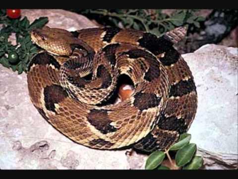 Types of venomous snakes - YouTube