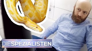 Krasse Panikattacke: Riesen Würgeschlange in Wohnung! | Oliver Dreier | Die Spezialisten | SAT.1