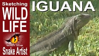 Speed Sketching the Iguana