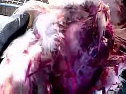 - The video the meat industry doesn't want you to see