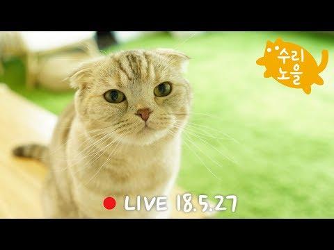 [생방송]수리노을 고양이가족 2018년 5월 27일 【SURI&NOEL】