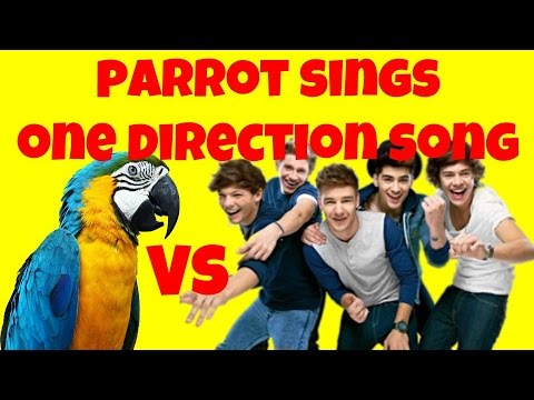 Parrot Sings One Direction Song - Amazing Video