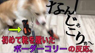 こんにちは! 少し前に東京に遊びに行った時に立ち寄ったヴィーナスフォ...