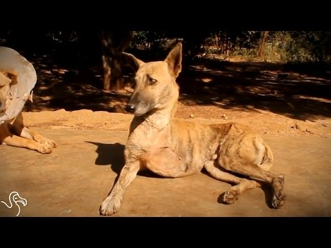 Stray Dog Caught In Trap Finds Just The Right People To Help