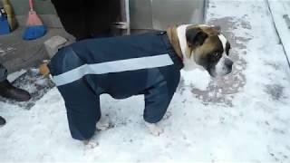 Собачий комбинезон своими руками из старых зонтов.
