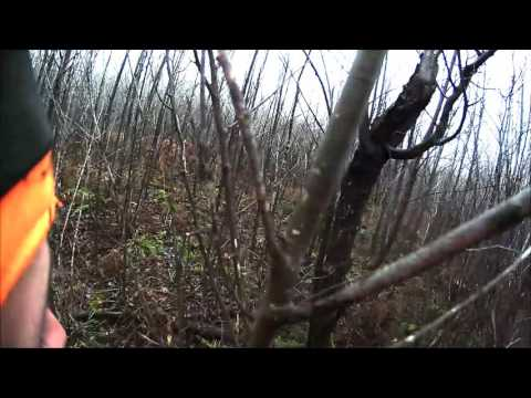 Snowshoe Hare Hunting
