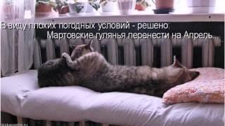 Апрельские кошачьи приколы. Фото шоу от http://kiskavasha.ru