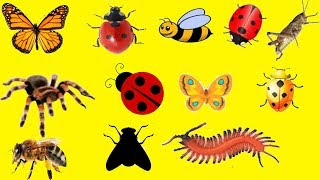 BUGS Insects Video For Children Toddlers Babies Best Insect Toys For Kids Learn Insect & Bugs Video